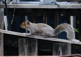 What-a-squirrel-looks-like-2