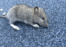 mouse removal 7